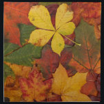 "Brightly Colored Fall Leaves Cloth Napkin<br><div class=""desc"">Contrasting colors of fall leaves where most of them haven&#39;t started to dry out yet. Greens,  yellows,  oranges and reds make for a great image.  &quot;fall&quot; &quot;autumn&quot; &quot;colors&quot; &quot;leaves&quot; &quot;leaf pile&quot; &quot;yellow&quot; &quot;green&quot; &quot;red&quot; &quot;orange&quot;</div>"