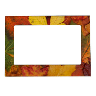 Brightly Colored Fall Leaves Magnetic Frame