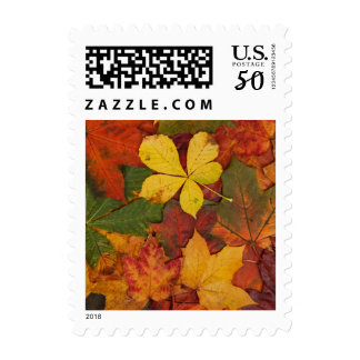 Brightly Colored Fall Leaves Postage