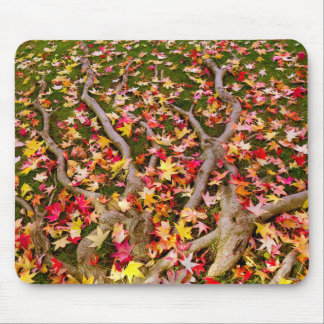 Brightly Colorful Maple Leaf Mouse Pad