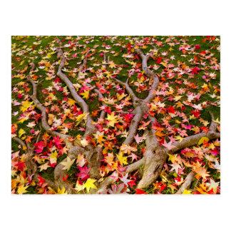 Brightly Colorful Maple Leaf Postcard