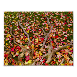 Brightly Colorful Maple Leaf Poster