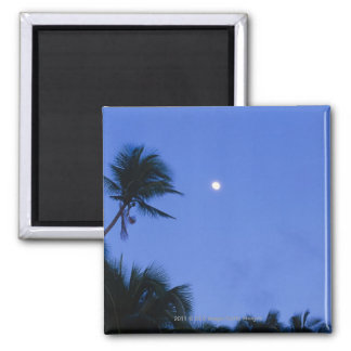 Brightly lit moon, silhouette of coconut trees magnet
