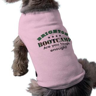 Brighton Bootcamp Doggie Shirt!