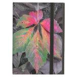 Brillantez entre el gris - hoja del otoño