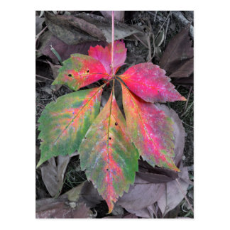 Brillantez entre el gris - hoja del otoño tarjeta postal