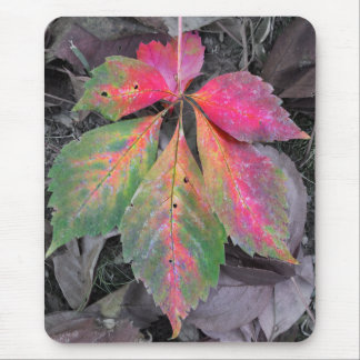 Brilliance Among the Grey - Autumn Leaf Mouse Pad