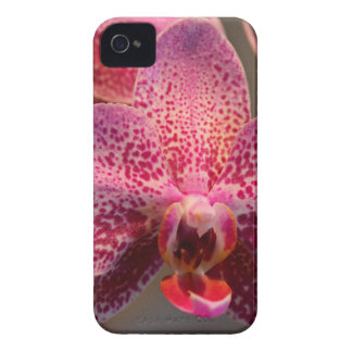 Brilliance Redefined iPhone 4 Cover