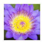 Brilliant Blue Lily Pad Bloom photo Gallery Wrapped Canvas