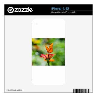 Brilliant Butterfly on Bright Orange Gerber Daisy Decals For iPhone 4S