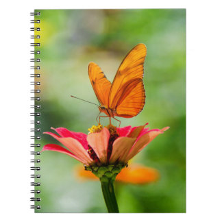 Brilliant Butterfly on Bright Orange Gerber Daisy Notebook