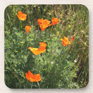 Brilliant California Poppies Coaster