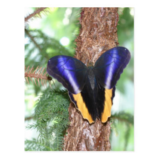 Brilliant Colored Butterfly Postcard