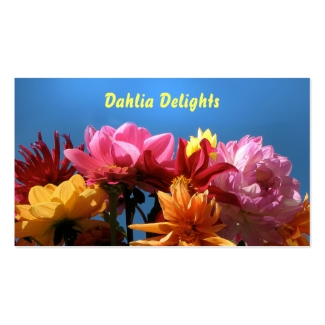 Brilliant Dahlias