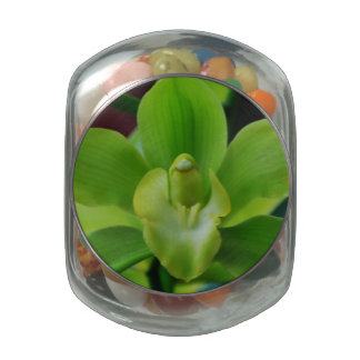 Brilliant Green Orchid Jelly Belly Candy Jars