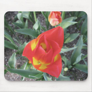 Brilliant orange and yellow Tulips Mouse Pad