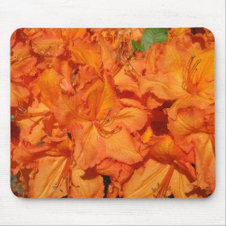 Brilliant Orange Azalea IMG_0831 Mouse Pad