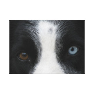 Brilliant Puppy Eyes Stretched Canvas Prints
