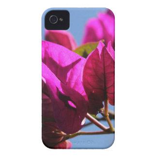 Brilliant Purple Bougainvillea iPhone 4 Cases