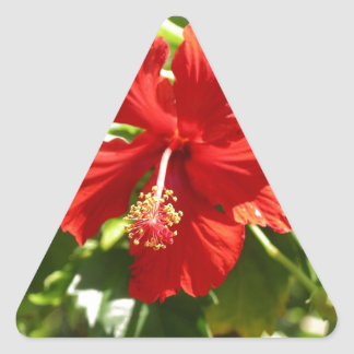 Brilliant Red Hawaiian Hibiscus Flower Triangle Sticker