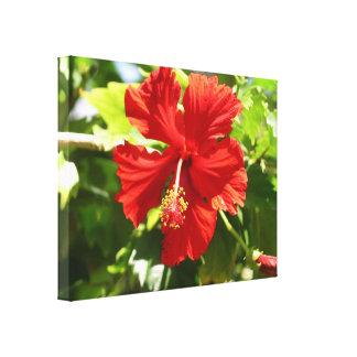 Brilliant Red Hibiscus Flower Canvas Print
