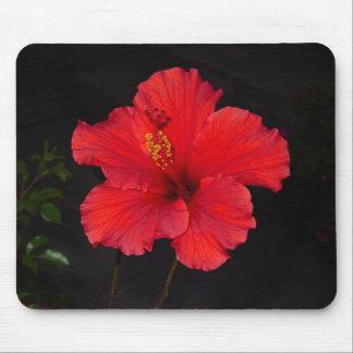 Brilliant Red Hibiscus Mousepad