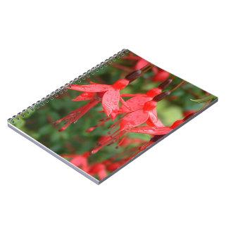 Brilliant red lantern flower Notebook