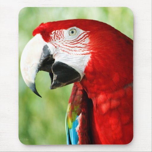 Brilliant Red Mouse Pad