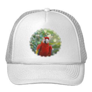 Brilliant Red Parrot Baseball Hat