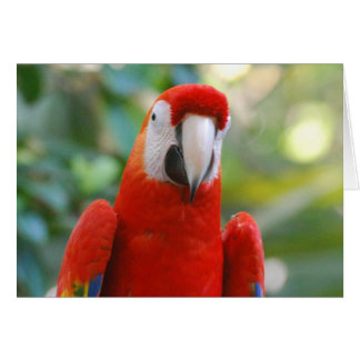 Brilliant Red Parrot Greeting Card
