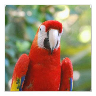 Brilliant Red Parrot Invitations