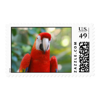 Brilliant Red Parrot Postage Stamp