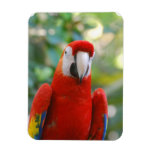 Brilliant Red Parrot  Premium Magnet Rectangular Magnet