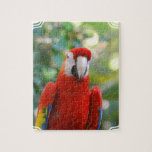 Brilliant Red Parrot  Puzzle