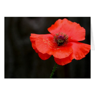 Brilliant Red Poppy Card