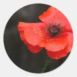 Brilliant Red Poppy Round Stickers