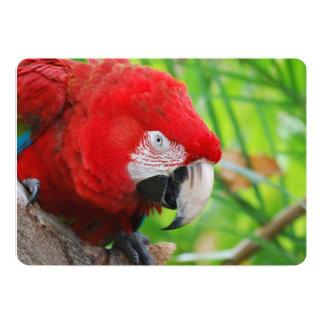 Brilliant Scarlet Macaw 5x7 Paper Invitation Card