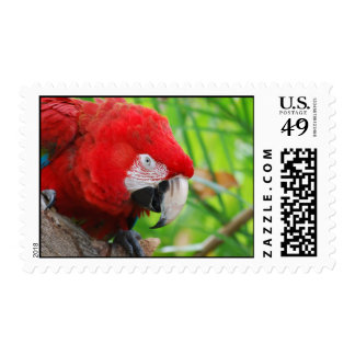 Brilliant Scarlet Macaw Stamps
