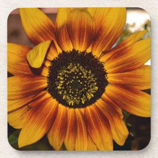 Brilliant Sunflower Beverage Coaster