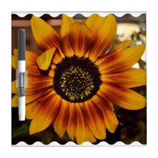Brilliant Sunflower Dry Erase Boards