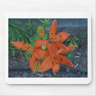Brilliant Tiger Lily Mouse Pad