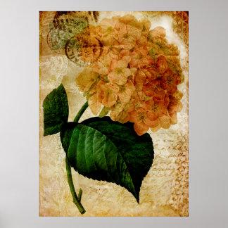 Brilliant Vintage Hydrangea c. 1900s Poster