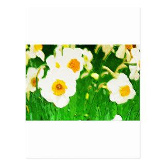 Brilliant White Daffodils Postcard