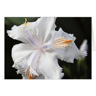 Brilliant White Japanese Iris Bloom & Bud Card