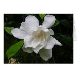 Brilliant White Summer Garden Blooms Note Card