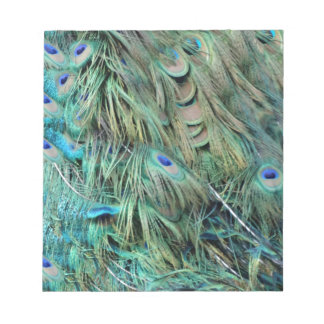 Brilliantly Peafowl Feathers Cool Eye Spots Notepad