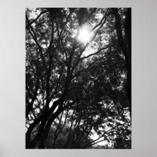 Brillo en los árboles póster