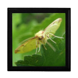 Brimstone Moth Gift Box