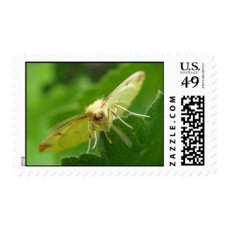 Brimstone Moth on a leaf Postage Stamp