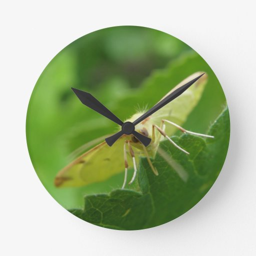 Brimstone Moth Wall Clock
